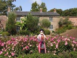 Amazing Dahlias and gardener cottage