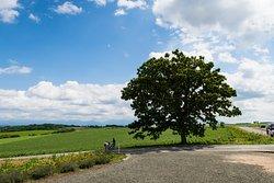 Seven Stars Tree