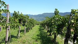 Petric Winery
