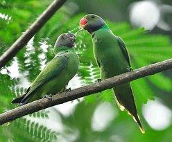 Birding with Uplanka Tours