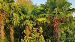 в саду гостевого домика Пальма