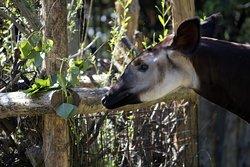 Parco Zoo Falconara