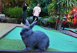 Mini Golf Rotorua