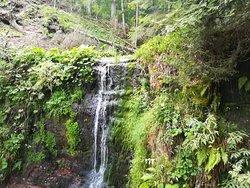 Sankenbachwasserfalle