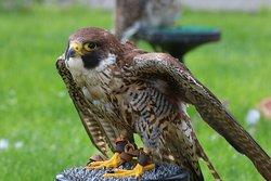 National Bird of Prey Centre