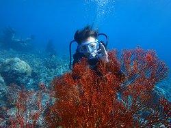 Baruna Dive Bali