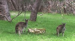 More wildlife in the park