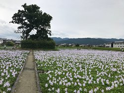 Ruins of Motoyakushiji Temple