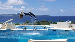 冲绳海洋博公园海豚表演剧场