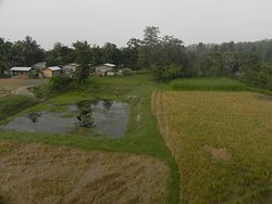 Green fields at the back
