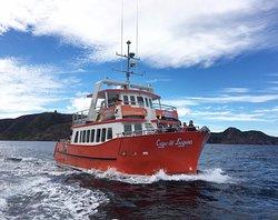 Iceberg Quest Ocean Tours