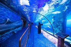 水底玻璃走廊隧道