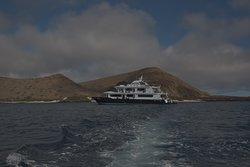 Petrel vor der Küste Santiago Islands