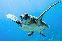 Pacific Rim Divers