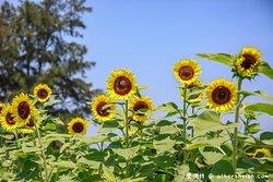 Sun & Green Farm