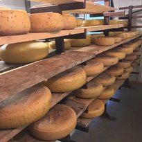 Wilma's Cheese Factory