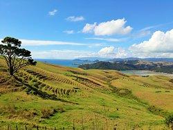 Aotea Roadies - Day Tours