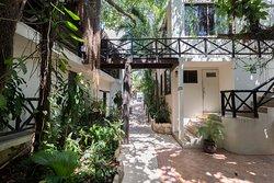 Frondoso bosquecito tropical, vista a la calle