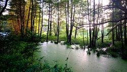 Niebieskie Zrodla Nature Reserve