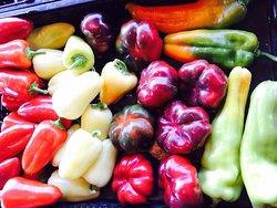 Krueger Pepper Gardens