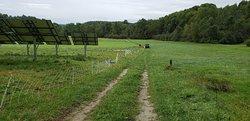 Vermont Shepherd