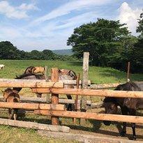 Togakushi Farm