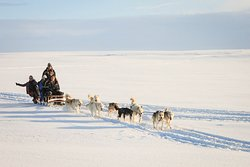 Dogsledding Iceland