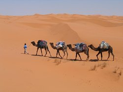 Thrill of Morocco