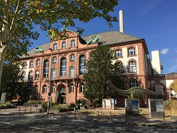 Senckenberg Natural History Museum (Naturmuseum Senckenberg)