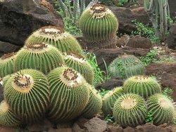 KCC Cactus Garden