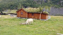 Sheep Grazing - Herbal Farm