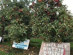The Big'r Apple Farm