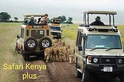 ‪Safari Kenya Plus - Private Day Tour‬
