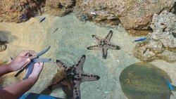 Keindahan bawah laut di jakarta aquarium