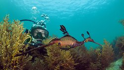 Bayplay-Discover SCUBA Diving!