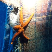 Alpha Divers Dykkesenter