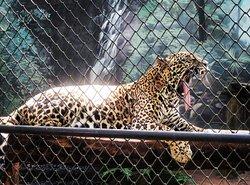 Zoo Bosque Guarani