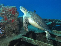 Special 'D' Diving & Charters