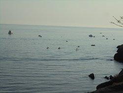Vistas panorámicas de la Playa de Maro