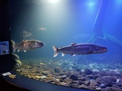 Yama no Aquarium
