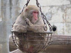 Nagano Chausuyama Zoo