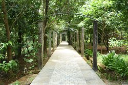 Walking area to the villas