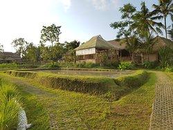 Visesa Balinese Healing & Spa