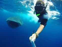 Whale Shark Adventures