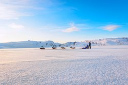 Snowhotel Kirkenes Husky