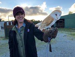 Falconry Kerry