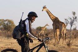 CycleMashatu - the Ultimate MTB Safari!