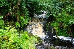 Glenarm forest