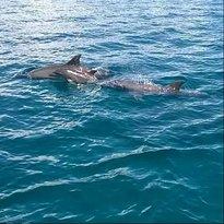 Zanzibar Dolphin Tours
