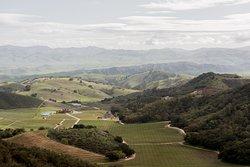 Eden Rift Vineyards